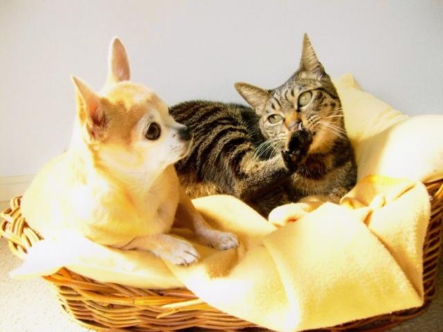 犬と猫のイメージ
