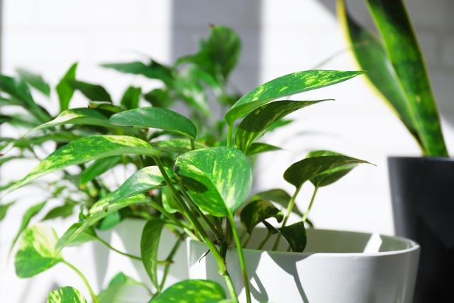 空気を良くする観葉植物のイメージ