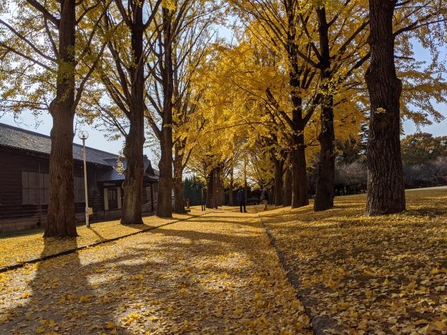 茨城県立歴史館 紅葉のイメージ