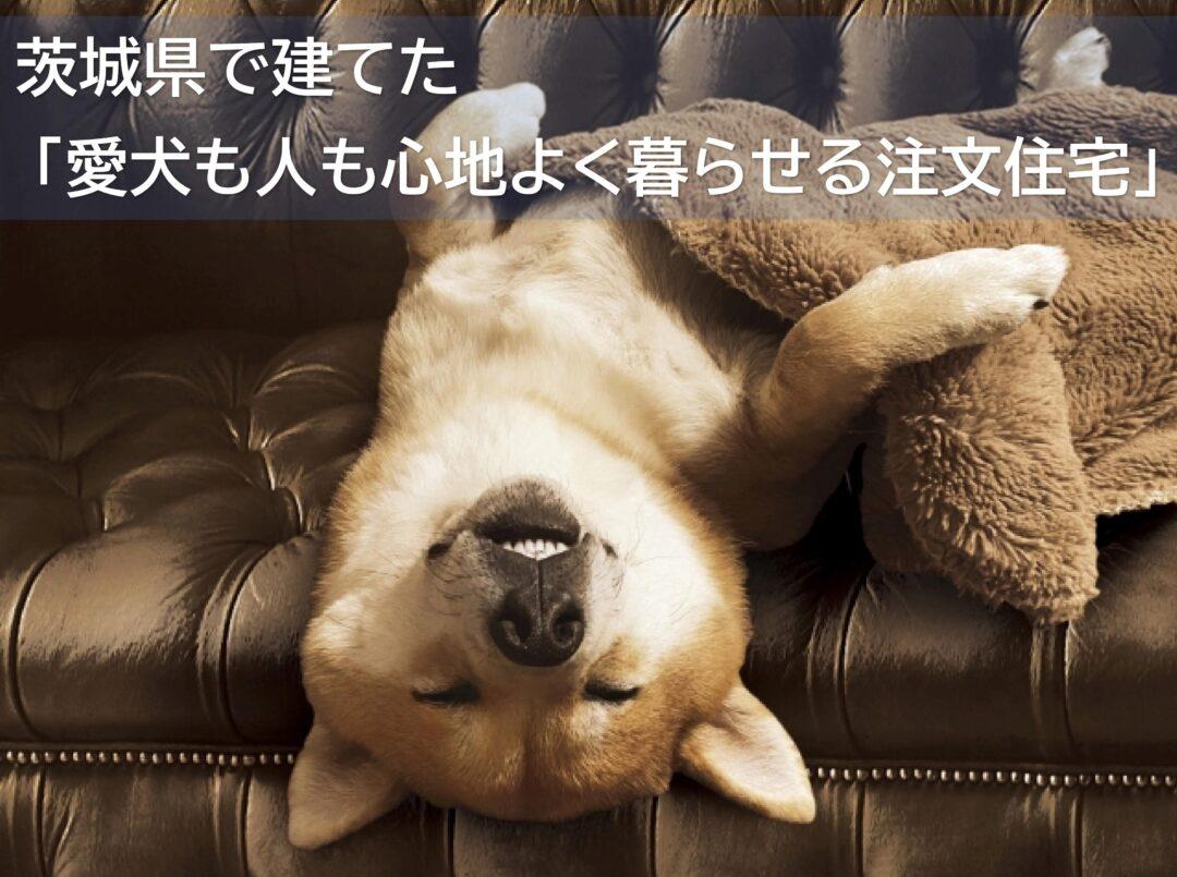 まとめ愛犬